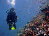 Corales en la Isla de Comodo, Indonesia.