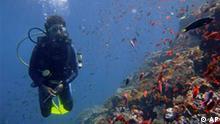 Welt Ozean Konferenz in Manado Indonesien Koralle in Sulawesi