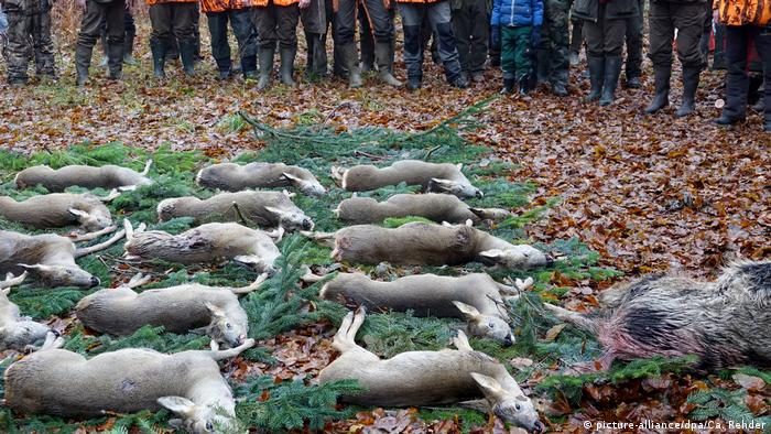 Erlegte Rehböcke und ein Wildschwein liegen aufgereiht auf dem Waldboden (picture-alliance/dpa/Ca. Rehder)