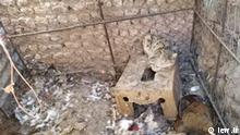 از زبالهگردی در زابل تا کشف توله یوزپلنگ در تهران