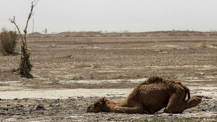 Iran Feuchtgebiete trocknen aus Jazmoonian (tnews)