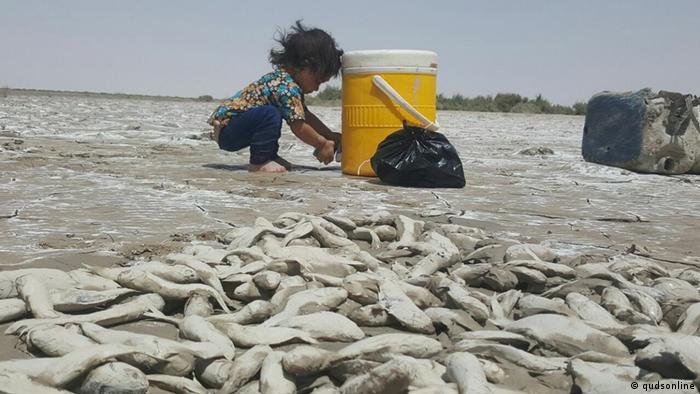 Iran Feuchtgebiete trocknen aus Hamoon (qudsonline)