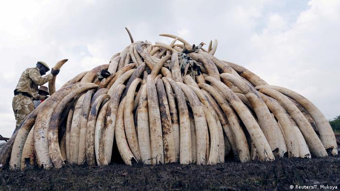 Kenia Elfenbeinhandel