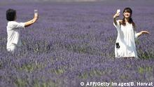 Chinese tourists make selfies in a lavender field in Valensole, southern France, on June 18, 2017. / AFP PHOTO / BORIS HORVAT (Photo credit should read BORIS HORVAT/AFP/Getty Images)