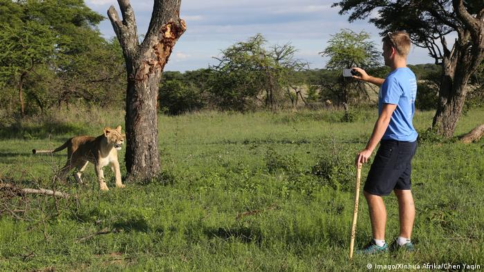 Photo: A man takes a photo of a lion cub in Antelope Park (Source: Imago/Xinhua Afrika/Chen Yaqin)
