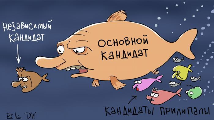 Рыбы разного размера и степени похожести на реальных людей и подписи: независимый кандидат, основной кандидат, кандидаты-прилипалы