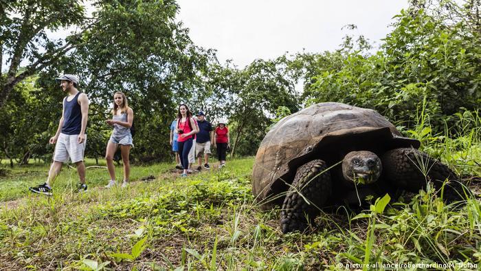 Touristen gehen an einer Riesenschildkröte vorbei