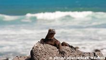 Ecuador Galapagosinseln