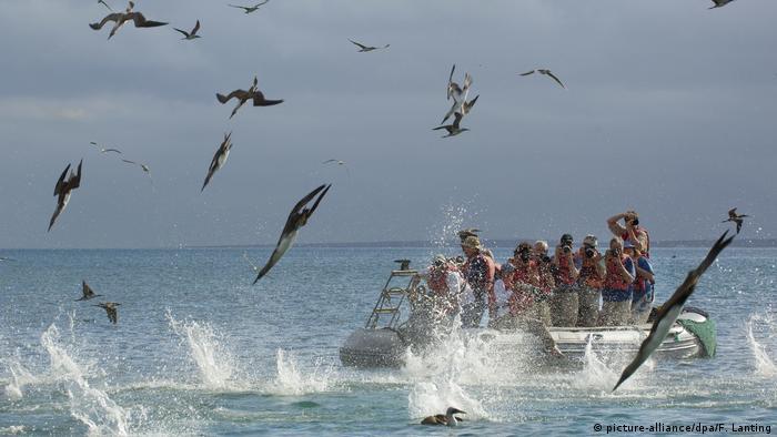Vor einem Boot mit Touristen stürzen sich Vögel ins Meer