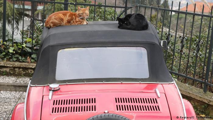 Türkei Katzen in Istanbul (Reuters/G. Tomasevic)