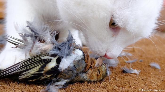 Slowenien Katze frisst Singvogel