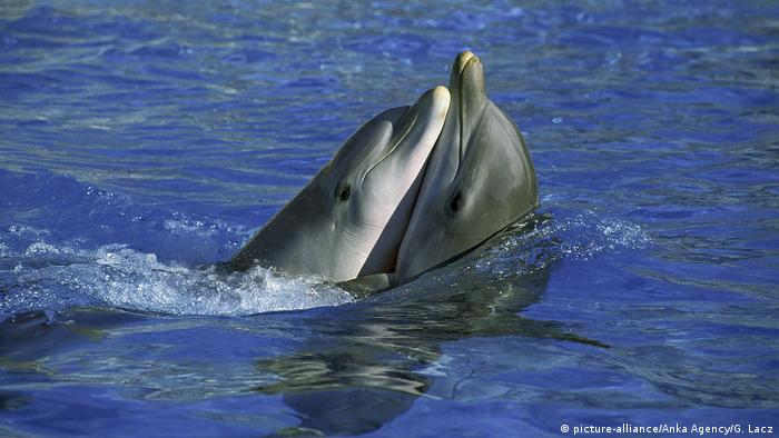 Global Ideas küssende Tiere Delfine