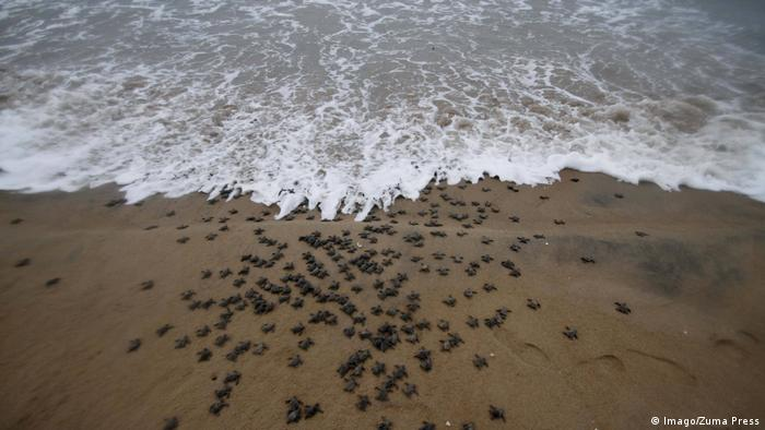 Schildkröten (Imago/Zuma Press)