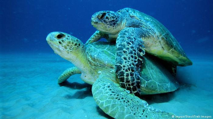 Schildkröten (Imago/StockTrek Images)