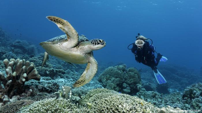 Schildkröten (Imago/imagebroker)