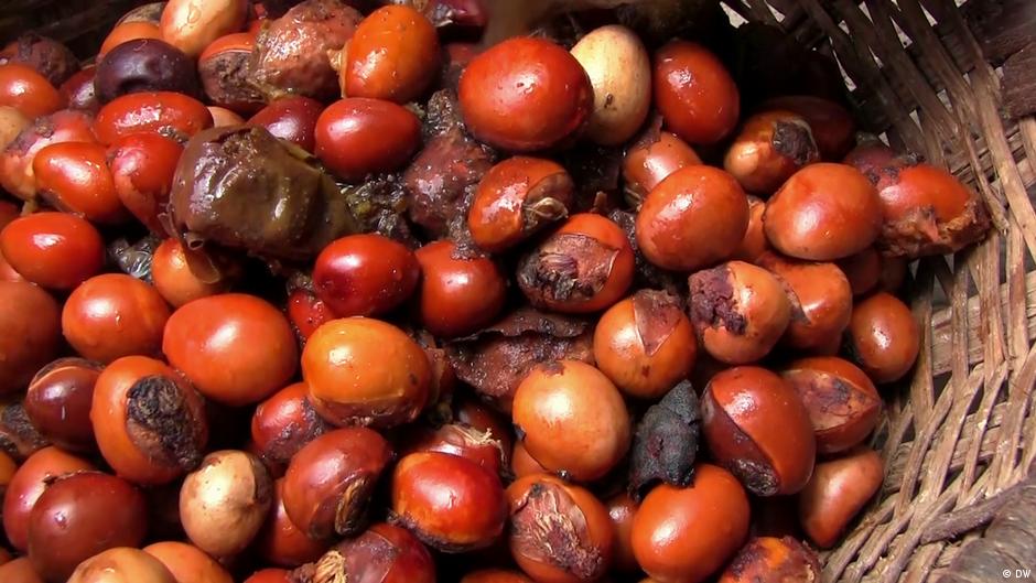 10 fat burning fruits