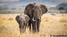 +++ Bildergalerie Das bringt der März +++ (170830) -- NAIROBI, Aug. 30, 2017 -- Two elephants walk at the Maasai Mara National Reserve, Kenya, Aug. 28, 2017. ) (zw) KENYA-MAASAI MARA NATIONAL RESERVE-ANIMALS LyuxShuai PUBLICATIONxNOTxINxCHN Nairobi Aug 30 2017 Two Elephants Walk AT The Maasai Mara National Reserve Kenya Aug 28 2017 ZW Kenya Maasai Mara National Reserve Animals LyuxShuai PUBLICATIONxNOTxINxCHN