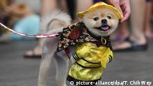 Kostümwettbewerb für Hunde