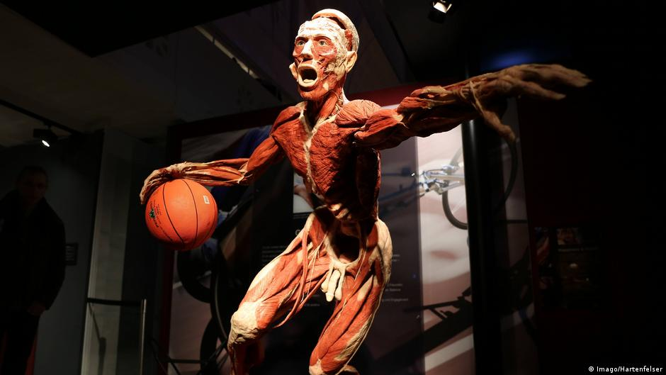 German Court Body Worlds Berlin Can Continue Displaying Dead Bodies