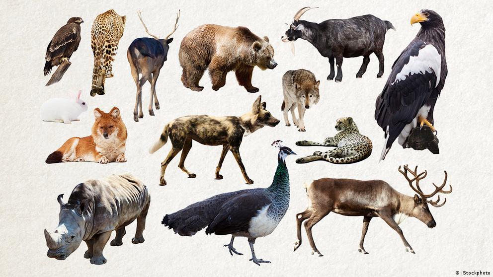 Deutschkurse | Wortschatz | WBS_Foto_Tier