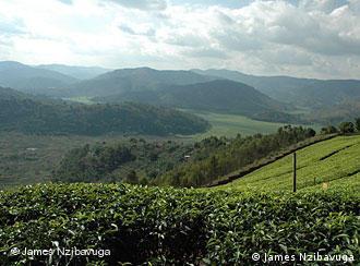 Ruanda, llamado país de las mil colinas, tiene un clima cálido y húmedo, ideal para el cultivo de té. Se estima que un 60% de la población vive en pobreza extrema.