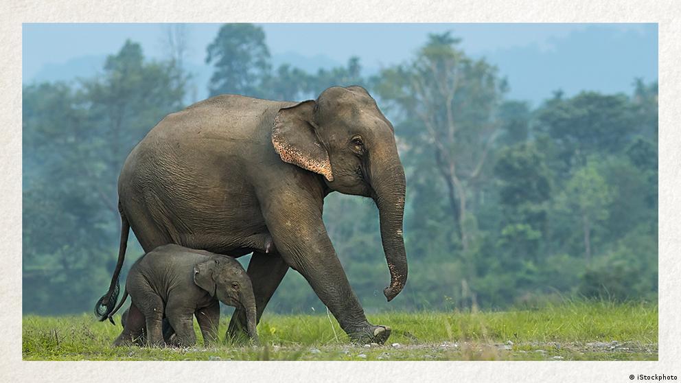 Deutschkurse | Wortschatz | WBS_Foto_Elefant