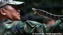 A Thai Navy instructor demonstrates how to catch a snake during a jungle survival exercise as part of the Cobra Gold 2018 (CG18) joint military exercise, at a military base in Chonburi province, Thailand, February 19, 2018. REUTERS/Athit Perawongmetha TPX IMAGES OF THE DAY