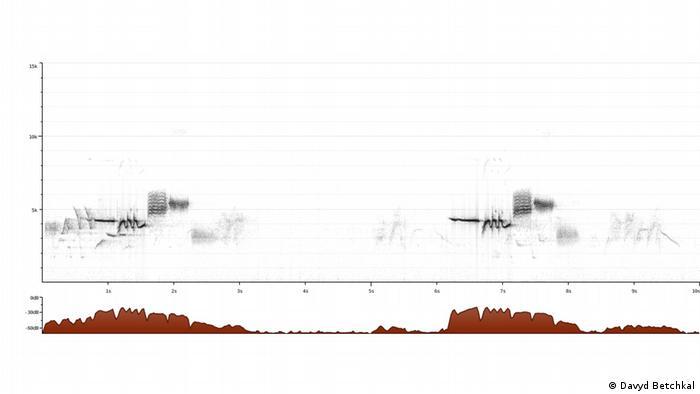 Spektrogram of a White-crowned Sparrow