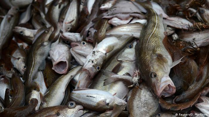 Nordsee Fischfang (Reuters/D. Martinez)