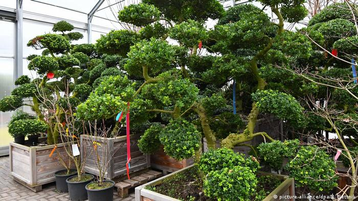 Mietpflanzen wachsendes Geschäftsfeld (picture-alliance/dpa/B. Settnik)