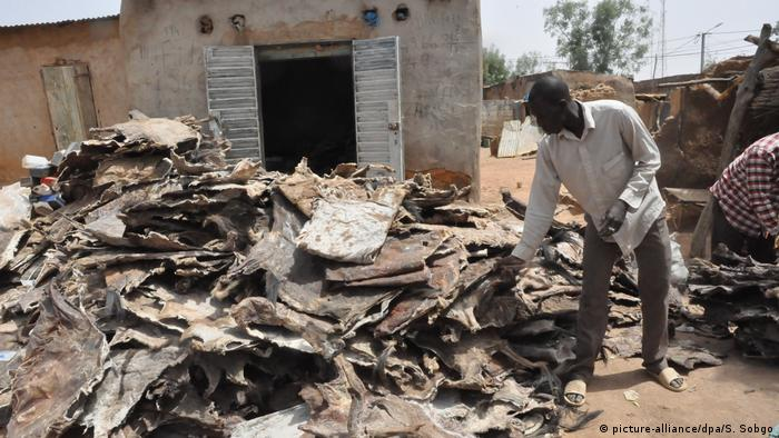Peles de burro no Burkina Faso prontas para serem exportadas para a China
