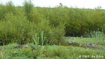Mangrove in Mosambik. Der Mensch zerstört die Vegetation