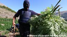 In this photo taken on Thursday Aug. 25, 2015, a masked police officer carries cannabis plants in Kurvelesh commune, 200 kilometers (125 miles) south of the Albanian capital, Tirana. Albanian police found and destroyed some 16,000 cannabis plants and arrested a suspect. So far half a million cannabis plants have been destroyed since the government set fighting drug cultivation and trafficking as a top priority. (AP Photo/Hektor Pustina) |