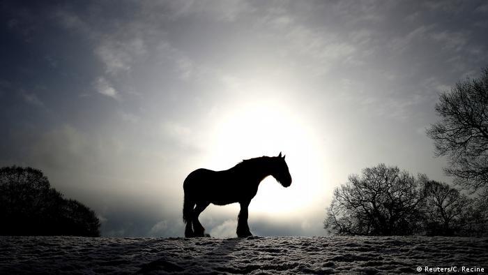 Großbritannien Newcastle-under-Lyme Pferd im Schnee
