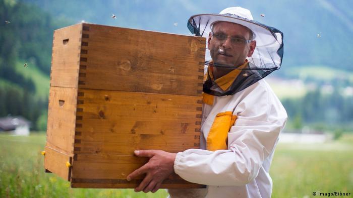 EU-Behörde: Pestizide schädigen Bienen