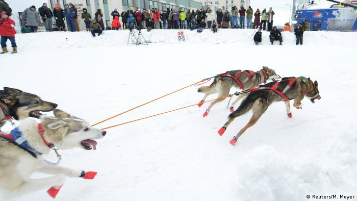 Dogs racing in snow