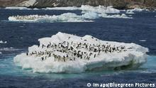 Danger Island | Adelie Pinguine (imago/Bluegreen Pictures)