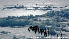 Antártida: descubrimiento inesperado de 1,5 millones de pingüinos