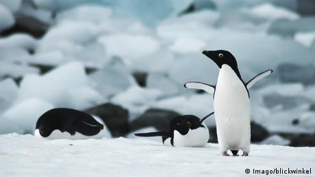Penguins in the snow of Antarctica, (Imago/blickwinkel)