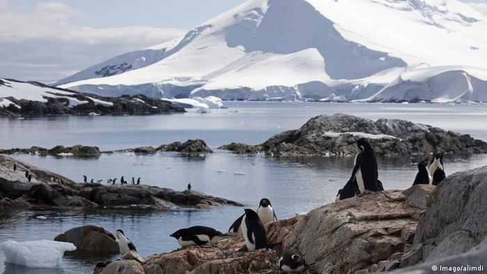 Penguins in an Antarctic landscape