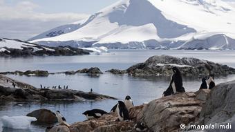 Ανταρκτική | πιγκουίνοι