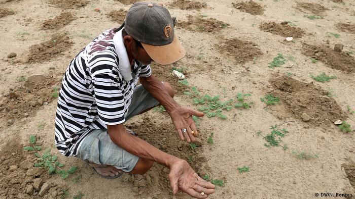 As covas rasas que guardam sementes de milho se destacam no terreno seco