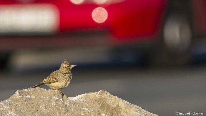 A bird sits near the road with cars in the background