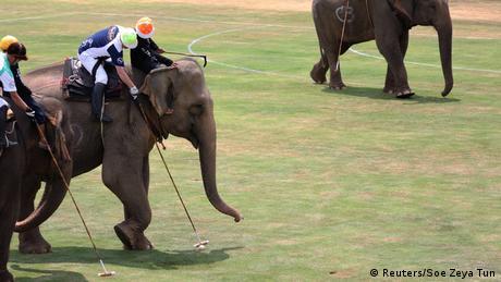 Thailand Polo-Sport mit Elefanten (Reuters/Soe Zeya Tun)