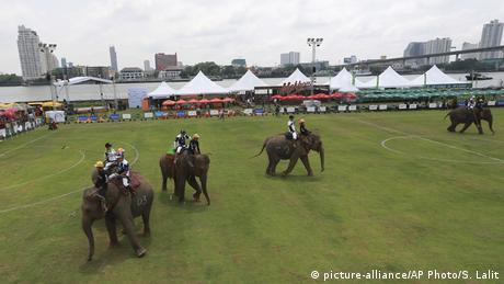 Blick auf das Elefantenpolo-Spielfeld (picture-alliance/AP Photo/S. Lalit)