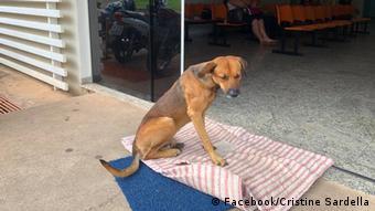 Brasilien Loyaler Hund (Facebook/Cristine Sardella)