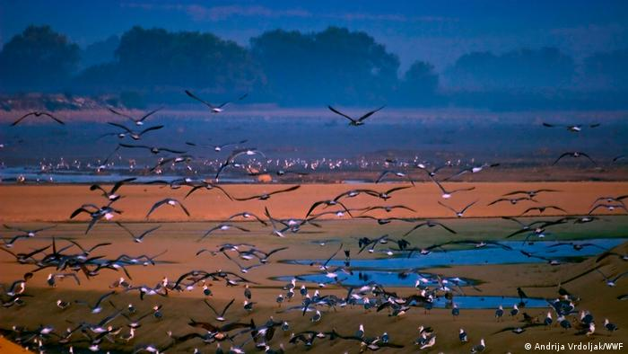 Stausee Lipsko jezero (Andrija Vrdoljak/WWF)