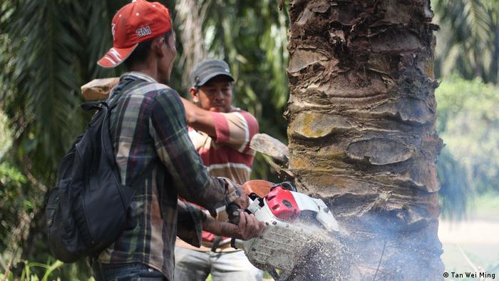Indonesien SOS geschnitzt in Palmölplantage (Tan Wei Ming)