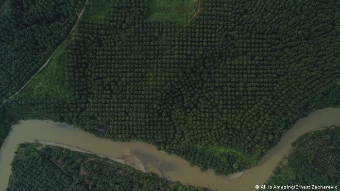 Indonesien SOS geschnitzt in Palmölplantage (All Is Amazing/Ernest Zacharevic)