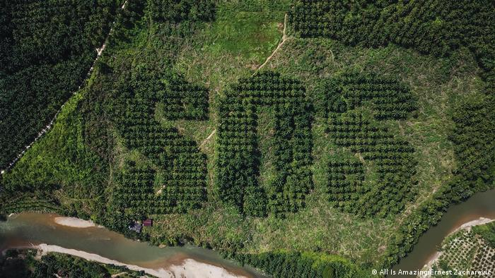 SOS carved into Indonesian palm oil plantation
